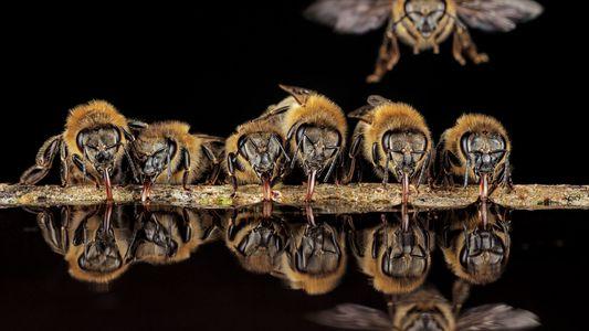Ce photographe a installé son appareil directement dans un nid d'abeilles