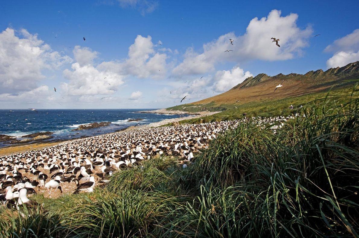 Les îles Malouines, un archipel reculé de près de 800 îles situé à 480 km à ...