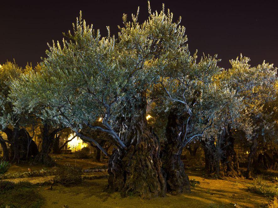 Jésus pria dans le jardin de Gethsémani (mot sans doute araméen signifiant «pressoir à huile») quelques ...