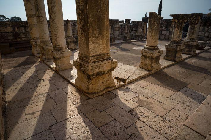 Cette synagogue des 2e - 5e siècles, à Capharnaüm, a été en partie restaurée. Ses colonnes ...