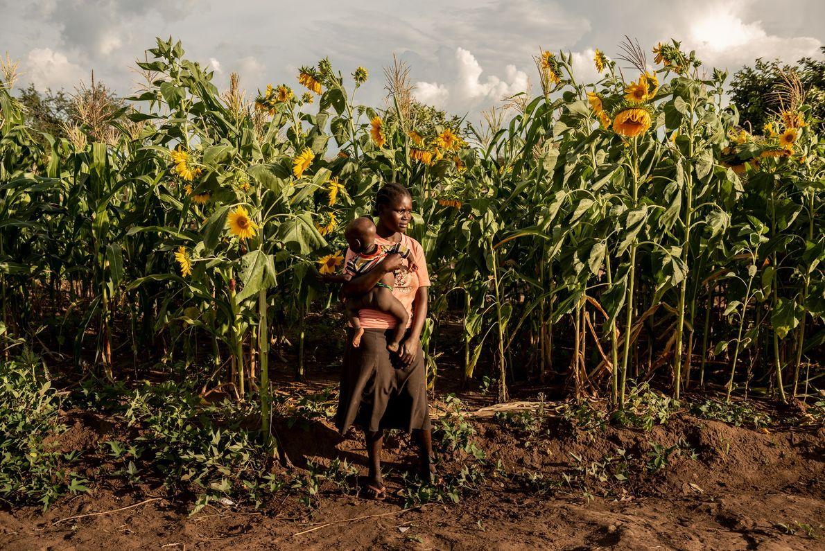 Susan Meneno tient dans ses bras sa petite fille d'un an devant le champ de tournesols ...