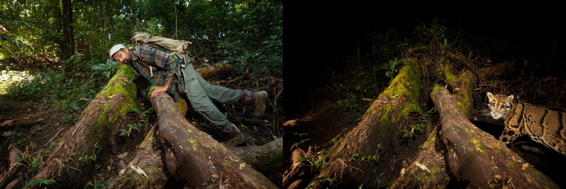 Test d'un piège photographique dans la région du Dampa, au nord de l'Inde. Cette détermination a ...