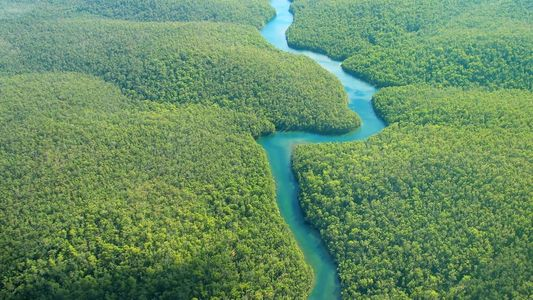 Découverte : La jungle amazonienne abritait de nombreuses civilisations précolombiennes