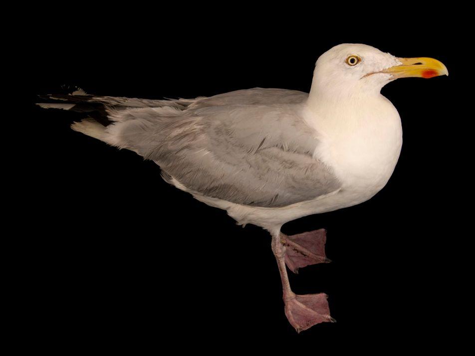 Mouettes, goélands et albatros : comment les différencier ?