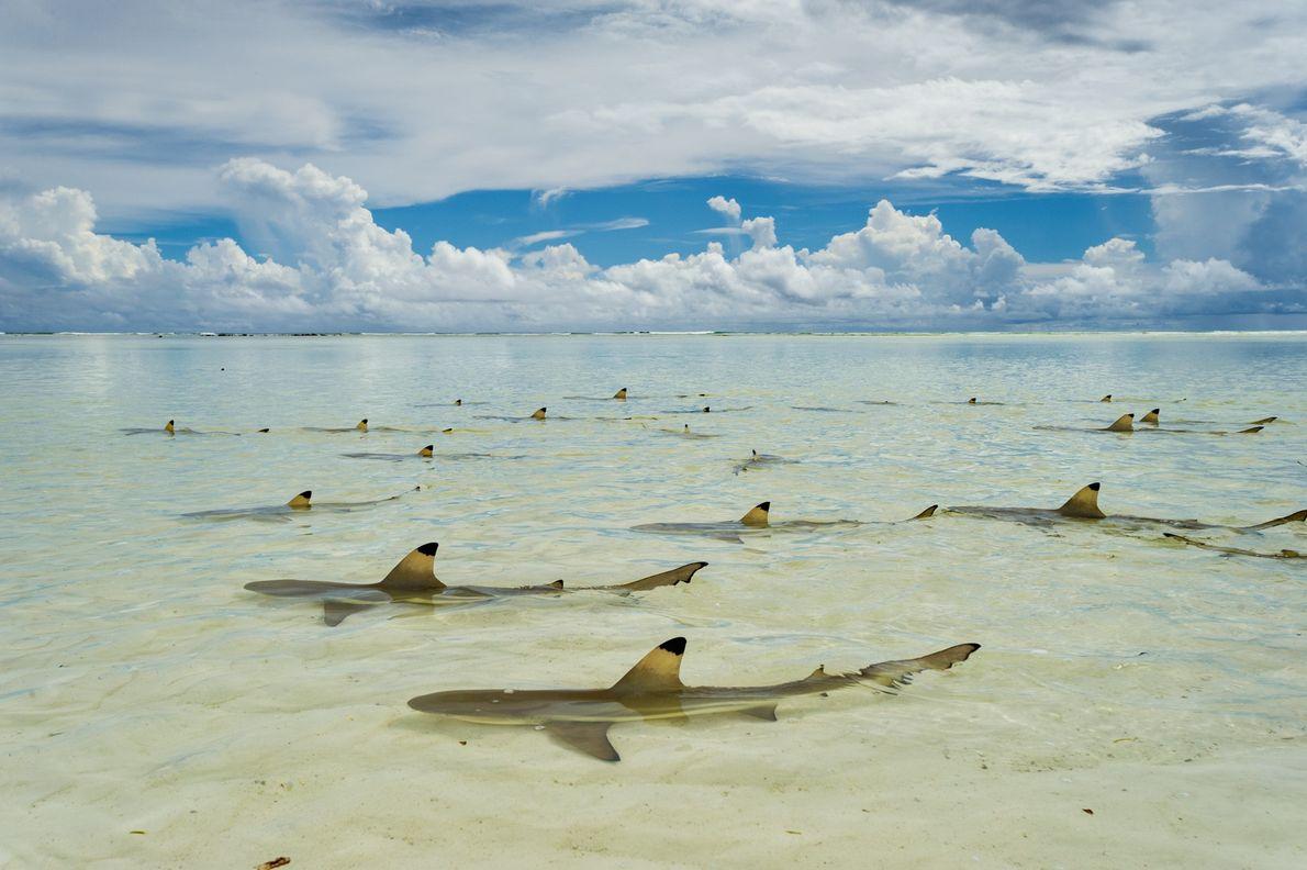 Atoll d'Aldabra, Seychelles.