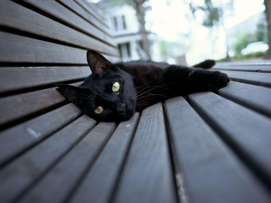 Sujet de superstition dans le monde entier, le chat noir est souvent considéré comme porte-malheur. Celui ...
