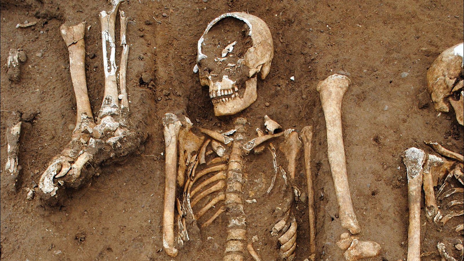 Quarante-huit personnes ont été enterrées dans une tombe commune sur les terres de l'abbaye de Thornto, ...