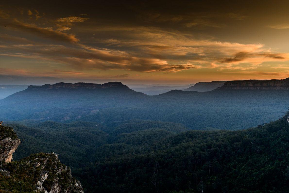Une légère brume stagne au-dessus d'une forêt dense d'eucalyptus qui recouvre les Montagnes bleues dans l'état ...