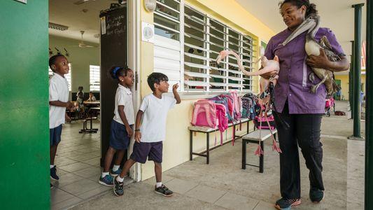 Bob, le flamant rose le plus connu de Curaçao