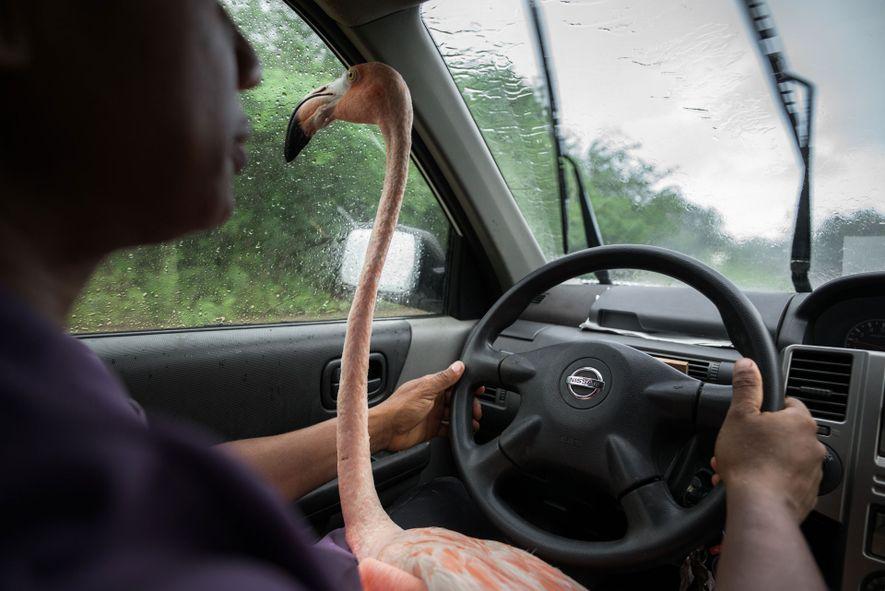 Bob se met derrière le volant alors qu'elle le conduit dans une école où il participera ...