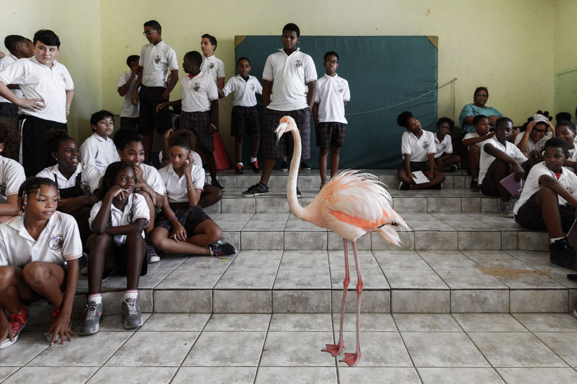 Bob le flamant rose se rend à l'école AE Goilo à Julianadorp pour sensibiliser les enfants ...