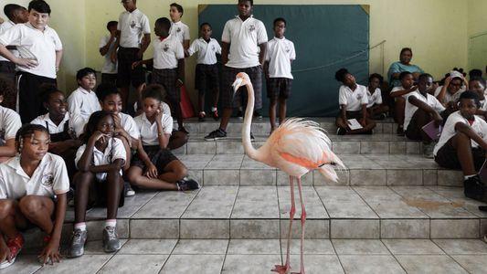 Voici Bob, le flamant rose ambassadeur du Curaçao