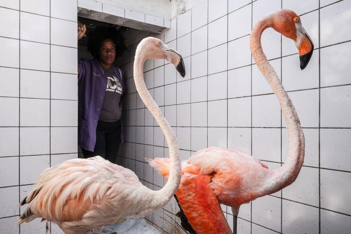 Alors qu'Odette agrandit son centre vétérinaire, les animaux sauvés restent temporairement dans les chenils à côté ...