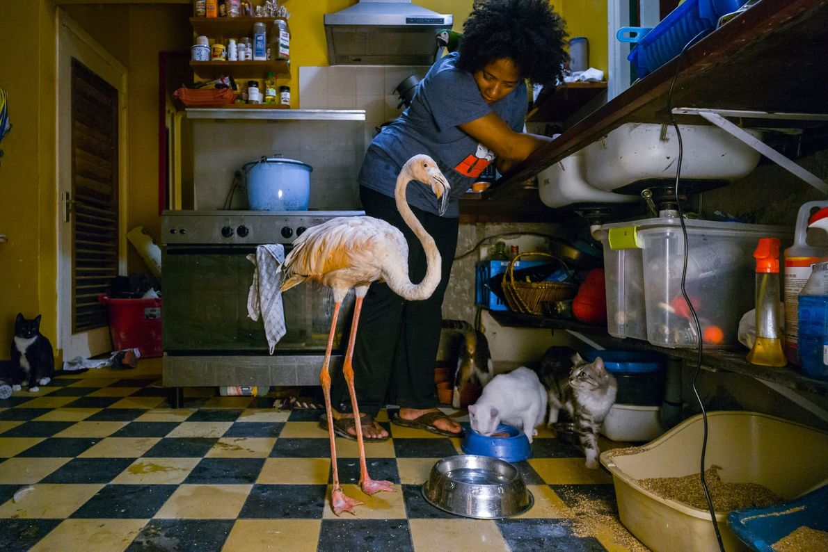 Après une journée de travail à la clinique vétérinaire, Odette rejoint Bob chez elle à Julianadorp, ...
