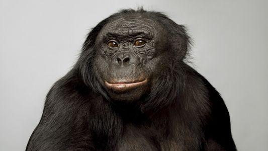 Comment mesurer l'intelligence animale ?