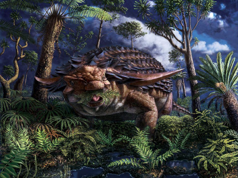 Le dernier repas de ce nodosaure a été exceptionnellement bien préservé