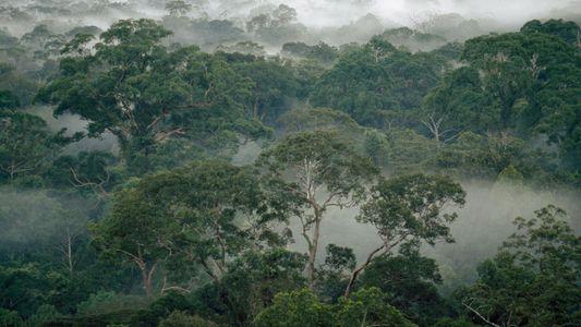 Comment les termites permettent aux forêts tropicales de résister au changement climatique