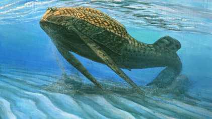Ce poisson de 400 millions d'années révèle l'évolution de la structure cellulaire des os
