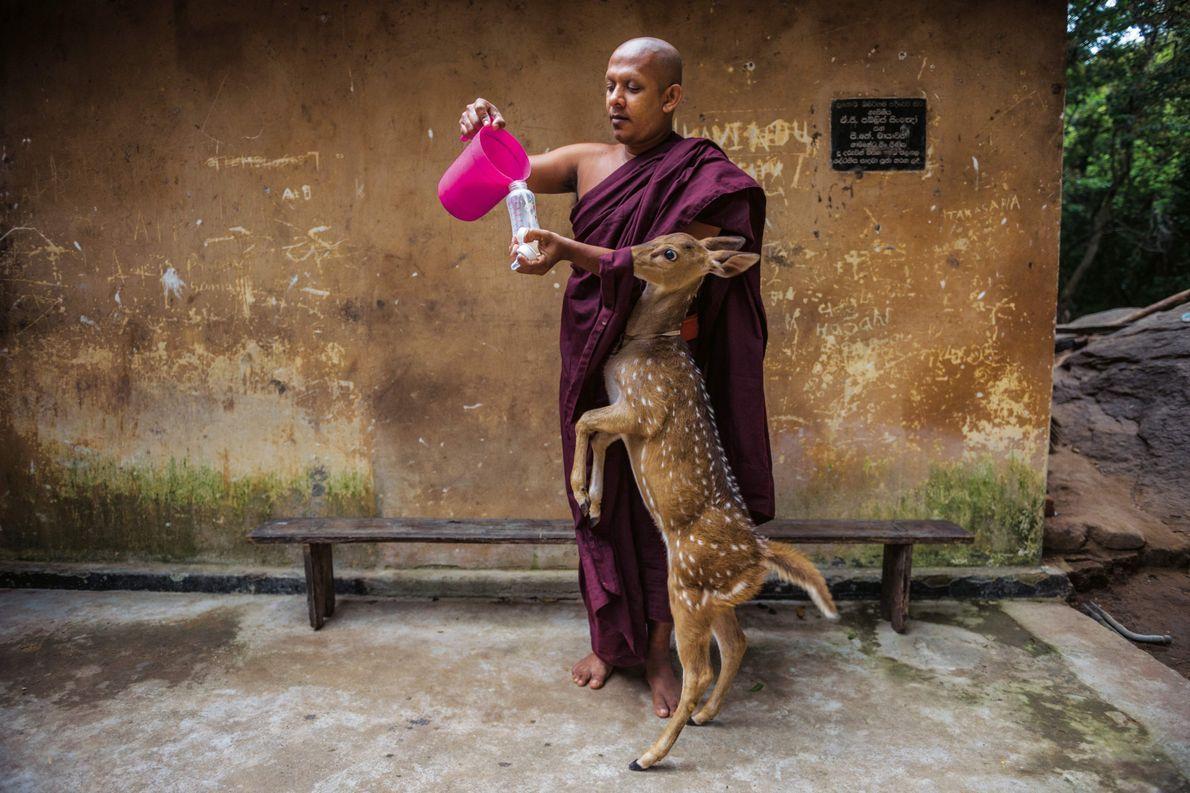 Bouddhisme millénaire