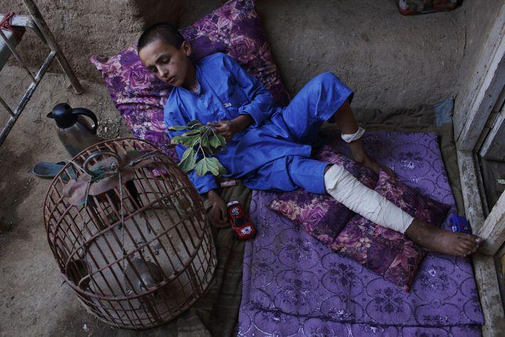 Jamshid est allongé sur des coussins et joue avec une perdrix chez lui, dans son village ...