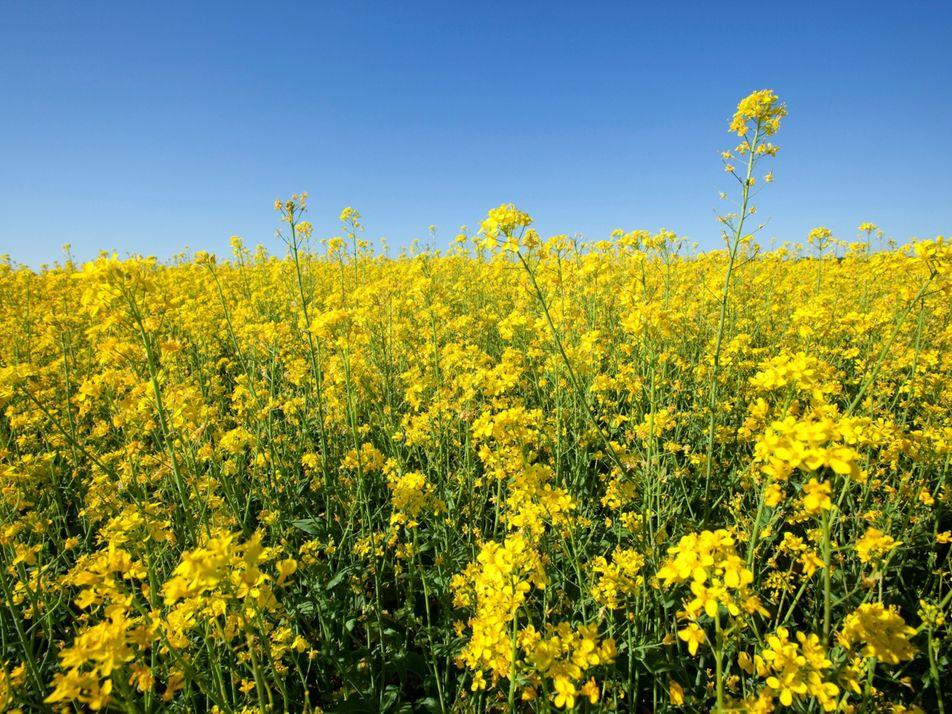 Comment préserver les plantes alimentaires dans un monde en proie au changement climatique ?