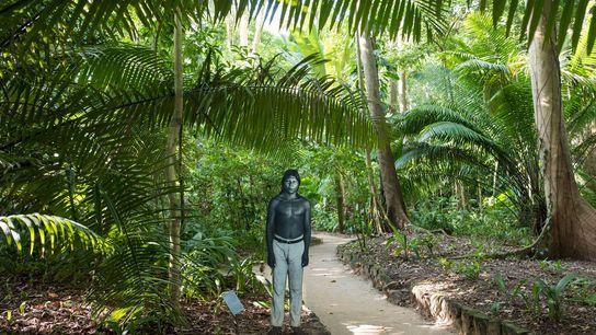 Le long d'un sentier sur le site du musée du Pará Emílio Goeldi, à Belém, se ...