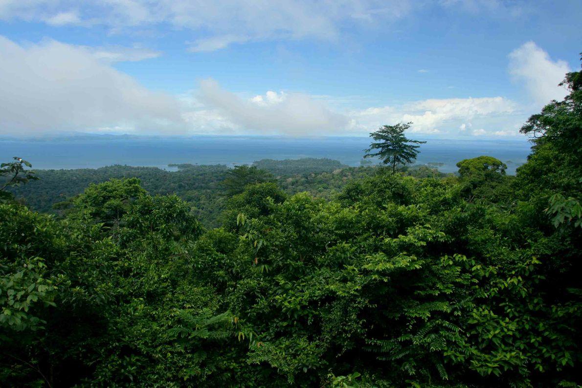 Cette profusion de vert émane de la réserve naturelle de Brownsberg, où cohabitent plus de 1 500 espèces ...