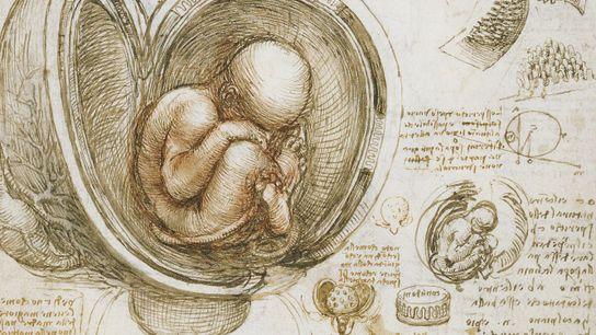 Léonard de Vinci était un anatomiste talentueux, ses dissections et son sens aigu de l'observation lui ...
