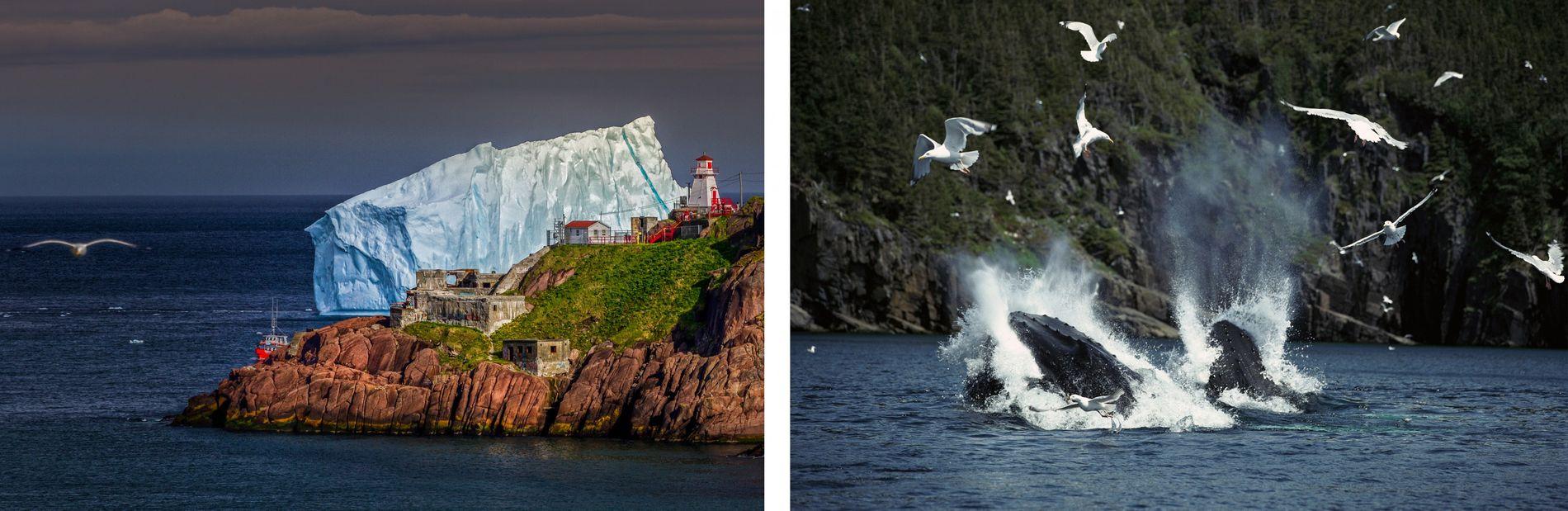 GAUCHE: Chaque printemps, des icebergs massifs vieux de 10 000 ans se détachent des glaciers de ...