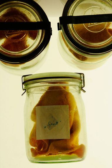 Human sweat smell samples in glass jars in the stasi museum in East Berlin
