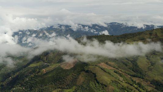 Le café colombien à l'heure du réchauffement climatique
