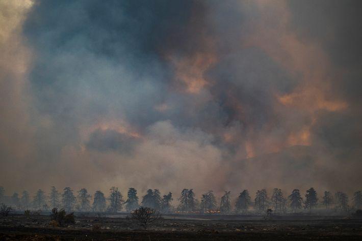 La fumée dégagée par les flammes de l'El Dorado épaissit le ciel de la forêt nationale ...
