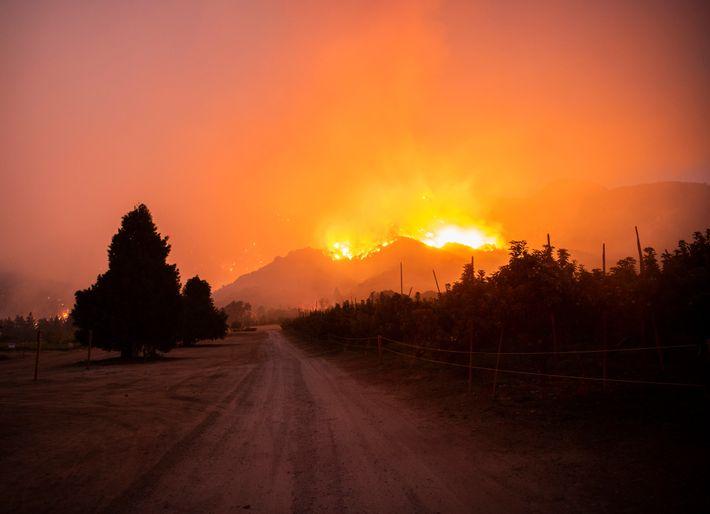 La nuit, l'incendie a pris la direction d'Oak Glen, un village perché dans les montagnes à ...