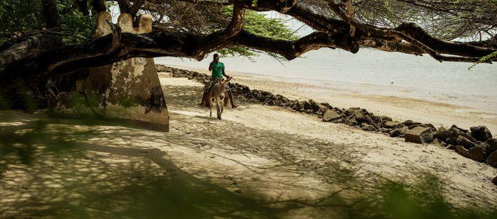 Balade à dos d'âne, Lamu, Kenya, 2019 - Recensés au nombre de 4000, à Lamu, les ...