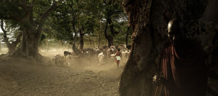 Portrait de Siyo appartenant à la tribu Massaï, Tanzanie, 2019 - Siyo est fermier et pratique ...
