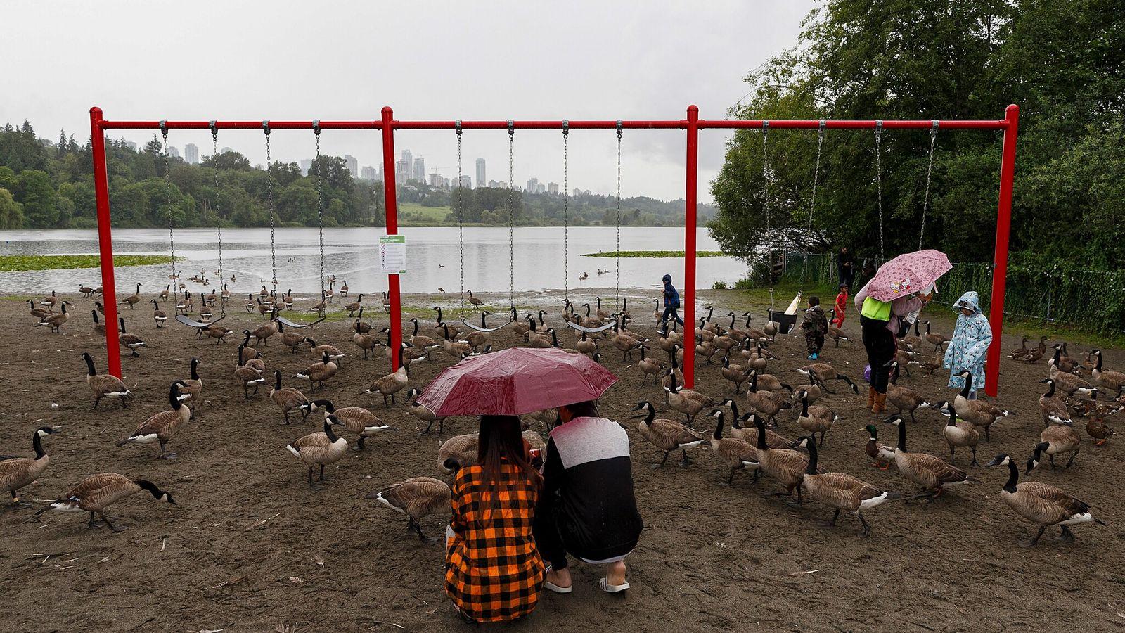 Des bernaches du Canada se rassemblent sur une aire de jeux du Parc du lac Deer, ...