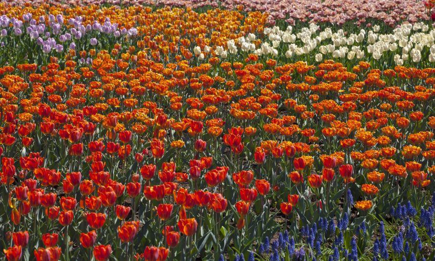 4 façons uniques de découvrir le Canada au printemps