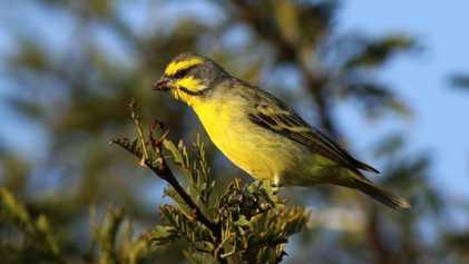 Le commerce d'oiseaux sauvages a diminué de 90 % en 12 ans