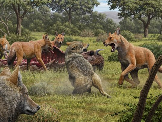 Canis dirus : cette espèce légendaire a bel et bien existé