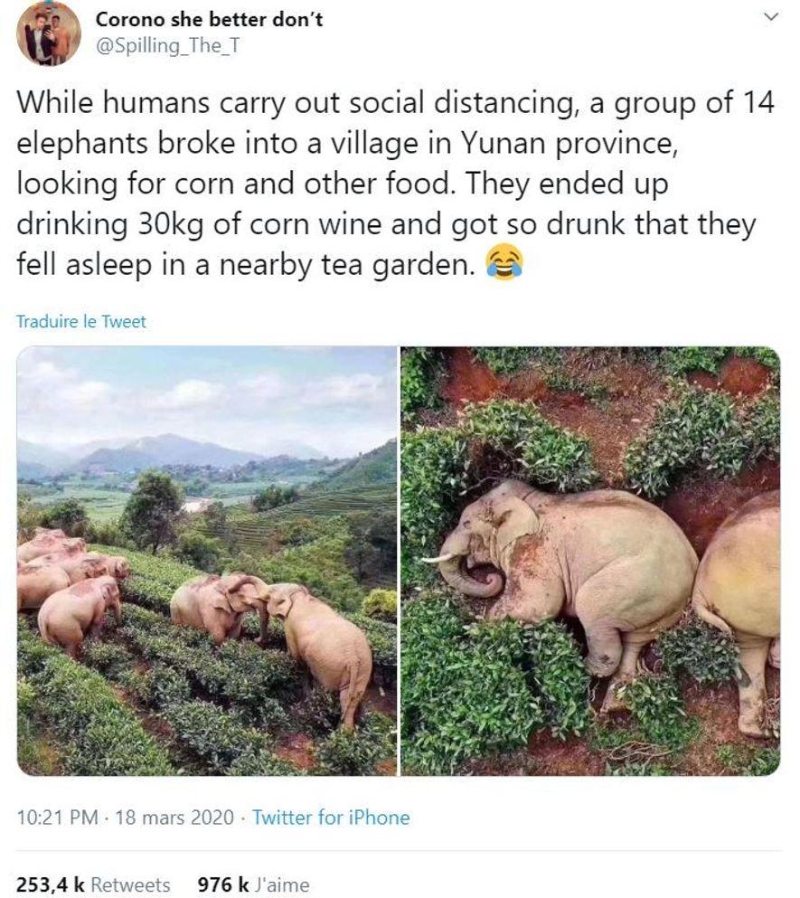 Des publications sur les réseaux sociaux prétendaient qu'en l'absence des humains, des éléphants s'étaient promenés dans ...