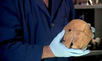 Amériques : la première blessure par balle daterait du 16e siècle