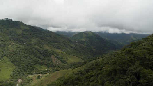 Après des décennies de conflit, le café revient enfin dans le Caquetá