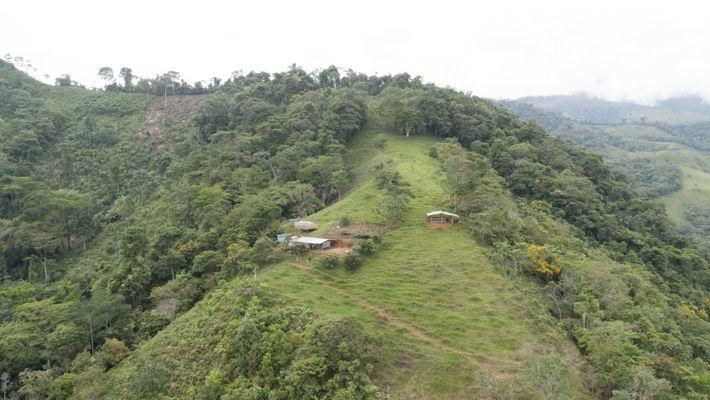 La région du Caquetá en Colombie est considérée comme une passerelle vers l'Amazonie. Ses conditions climatiques, ...