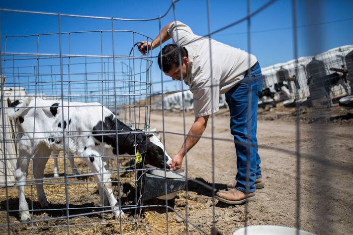 Clay McCarty est l'un des quatre frères à la tête de McCarty Family Farms, qui a ...