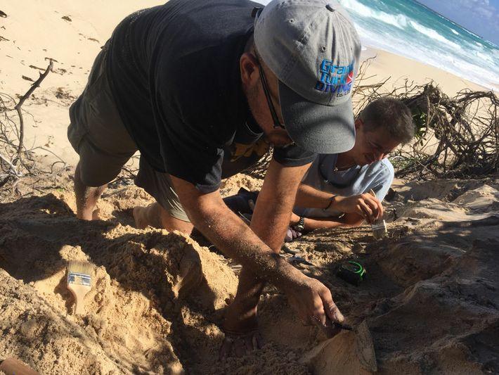 L'archéologue Michael Pateman et le Caribéen Anthony Maillis commencent à fouiller une dune sur Long Island ...