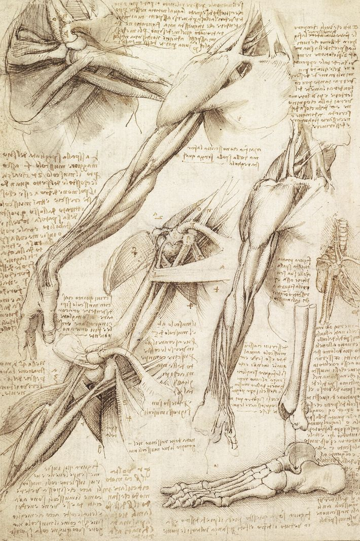 Déterminé à comprendre chaque parcelle du corps, Léonard a disséqué des cadavres animaux et humains. Sur ...