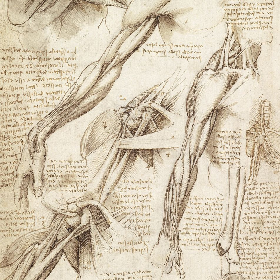 Les plus beaux croquis de Léonard de Vinci