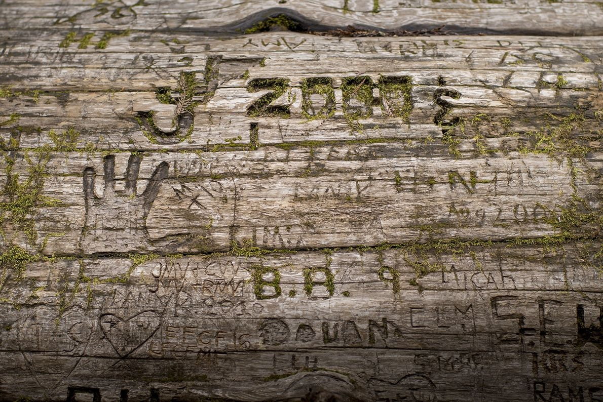 Des initiales, des dates et des symboles gravés sur l'écorce d'un séquoia mort.