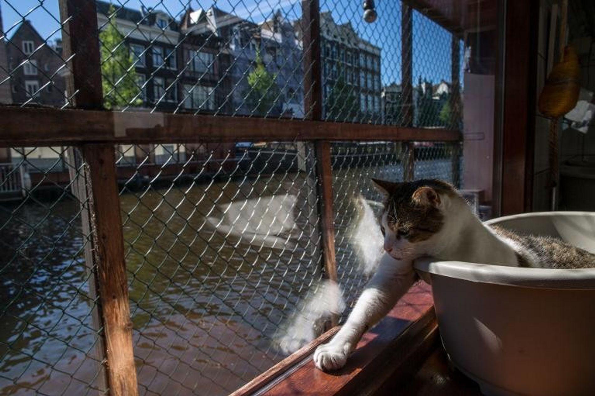 Icey, un chat de 8 ans, profite du soleil sur le pont du Catboat.