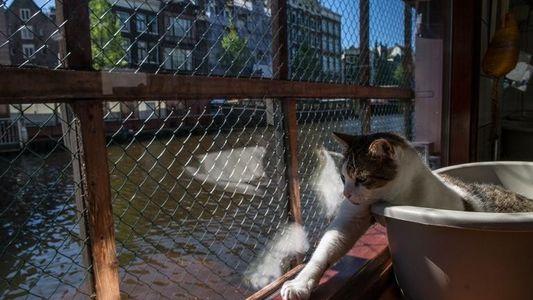 Le Catboat, la péniche qui recueille les chats abandonnés